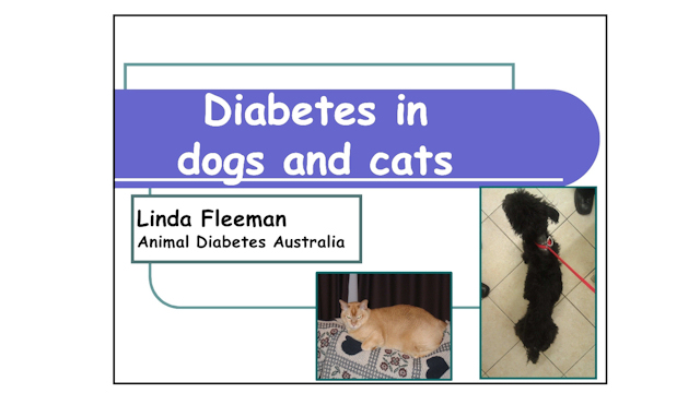 Diabetes In Dogs & Cats - Dr Linda Fleeman