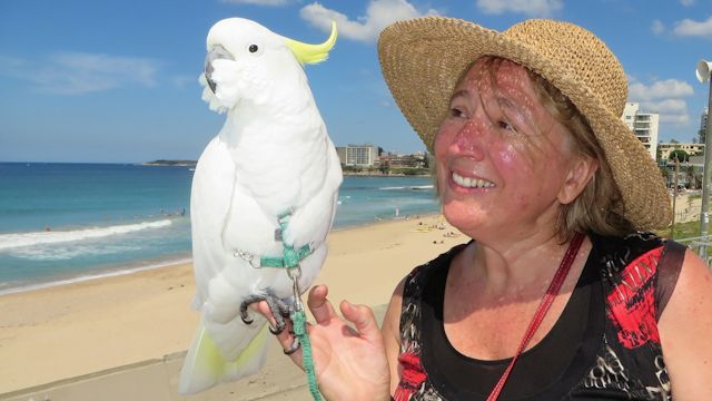 Is This Australia's Most Spoilt Bird?