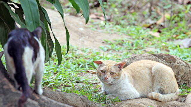 Can We Solve The Feral Cat Problem