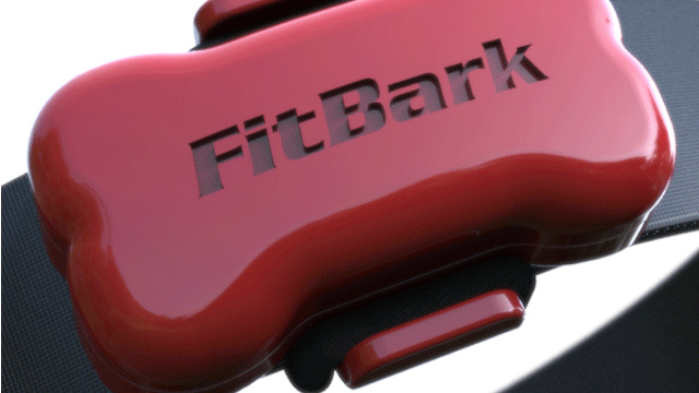 FitBark - A Great Way To Monitor Your Pets Activity