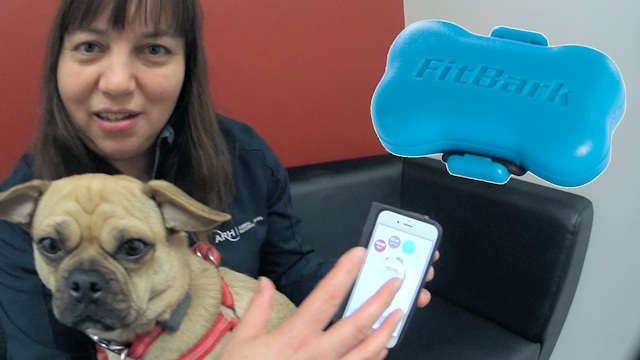 Dr Sarah Goldsmid with Ksubi - FitBark