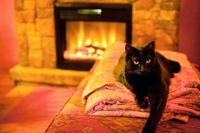 Keeping Pets Safely Warm This Winbter